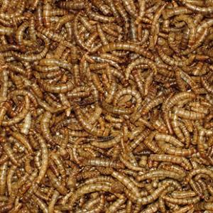Mealworms for garden birds 400g